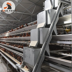 Chicken Farming Battery Laying Hen Cage Breeding 50000 birds in House