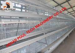 Poultry cage for chicken farm with automatic chicken manure removal machine