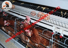 Layer cages & battery chicken cages for poultry farm with 10000 birds in house
