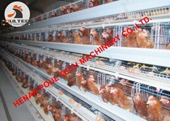 Poultry farm use battery chicken cage with automatic egg collection machine