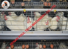 Layer poultry cage for c
