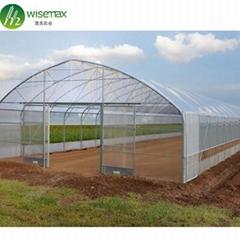 Hot Sale Single-Span Film greenhouse indoor
