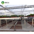 Horticultural greenhouse fixed greenhouse nursery bench for medicine 4