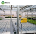 Hot sale greenhouse rolling benches ebb&flow table for commercial agriculture 2