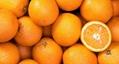 Fresh orange - Low Price - Finest