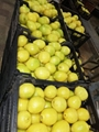 Fresh Lemon- Low Price - Finest quality