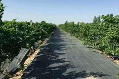 新型生态防草布园艺地布黑色防草布