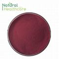 Anthocyanidins Cranberry Extract Powder