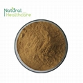 Natural pure Soybean Extract Soybean