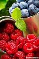 红树莓苗 5