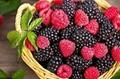 黑树莓苗 2