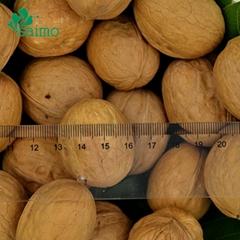 Chinese Hebei Origin Thin Shelled Whole Walnuts Inshell