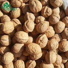 Xinjiang Origin 185 Thin Shell Walnut Bulk For Sale