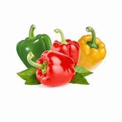 High quality green&red&yellow pepper