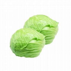 High quality round cabbage supply all year round