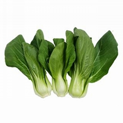 High quality pakchoi supply all year round