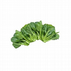 Fresh Choi sum from mountinous plateau supply all year round