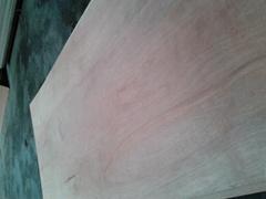 杨木包装板