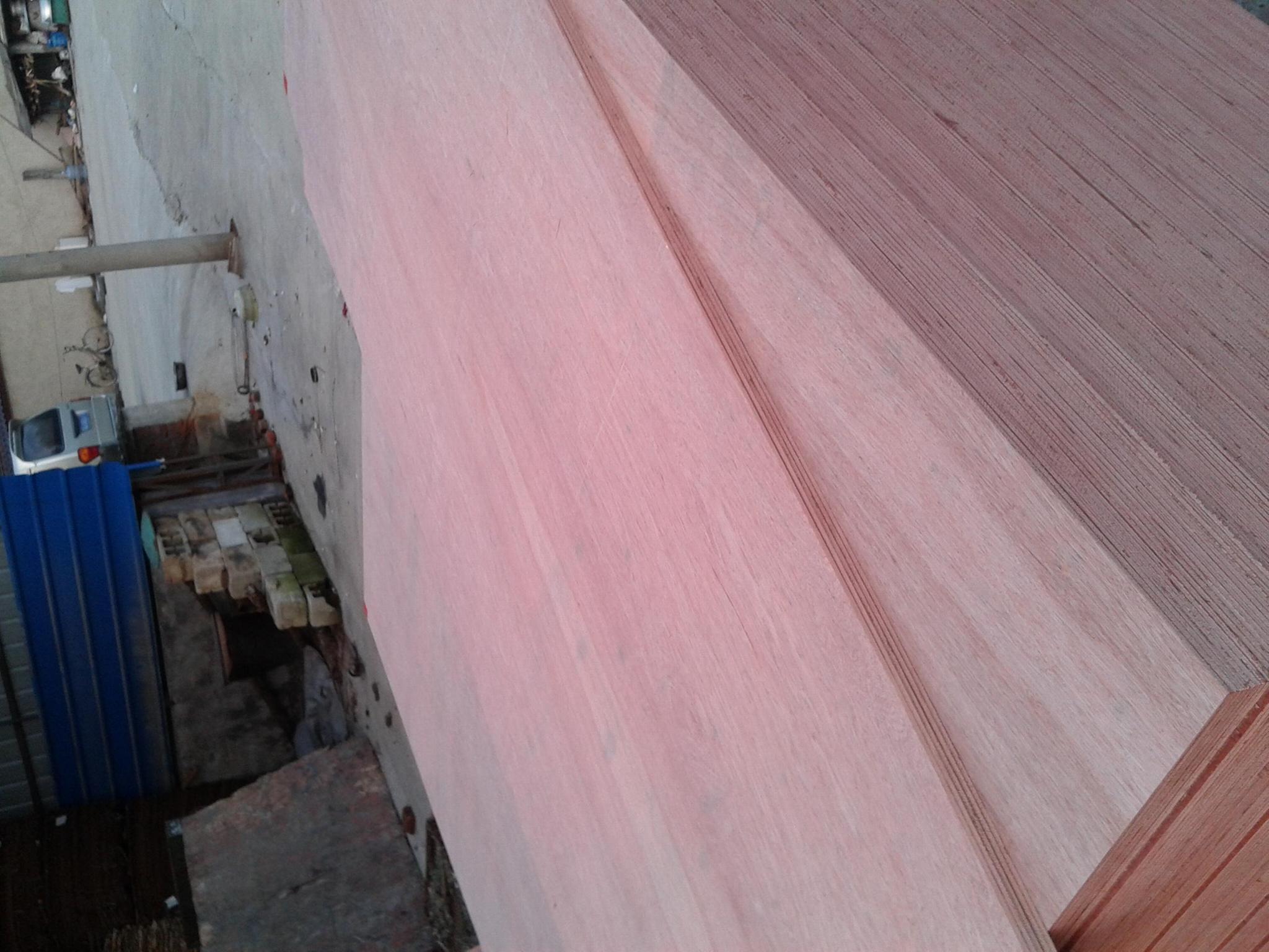 桉木胶合板 1