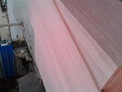 桉木膠合板