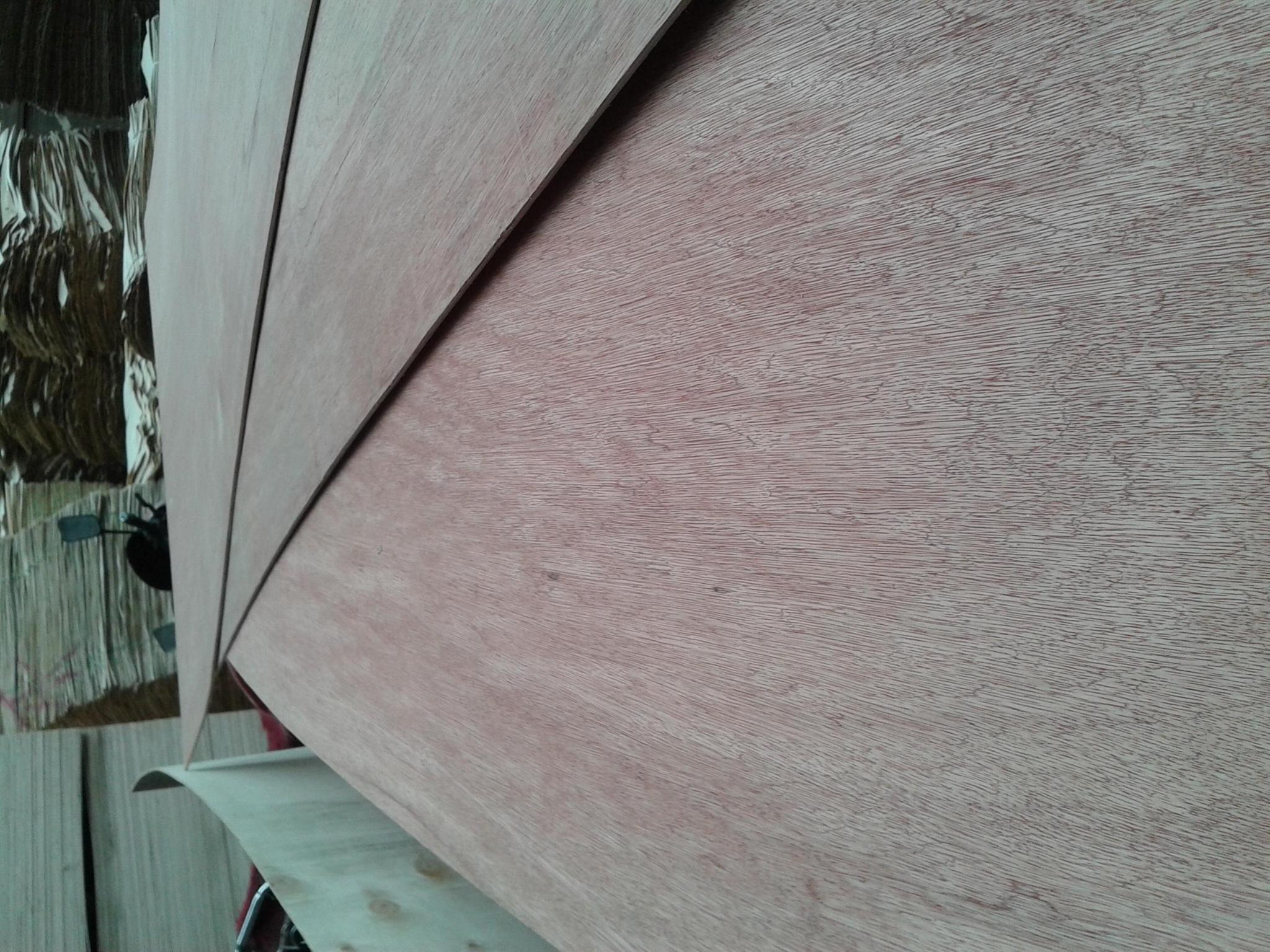桉木胶合板 3