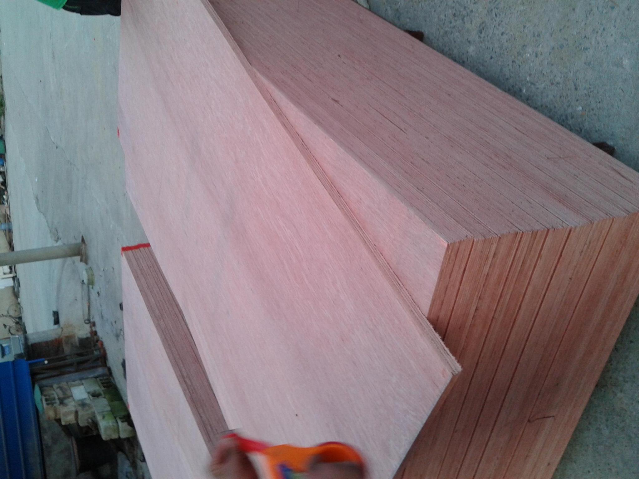 桉木胶合板 4