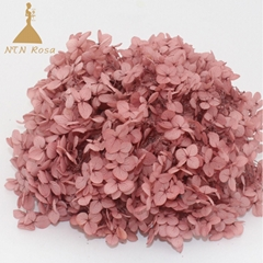 Grade A Small Leaf Preserved Hydrangea with More than 40 Colors