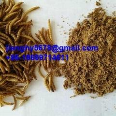 dried mealworm powder