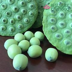 Fresh Fruit Lotus Seed Nut Kernel Lotus Seed Pod Head