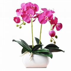 High Quality Real Touch Flower Arrangement Orchid Plants Bonsai Pot