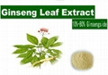 Ginseng Leaves Extract  2