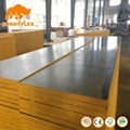 full piece film faced big size veneer eucalyptus hardwood plywood