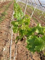 葡萄園搭架熱鍍鋅鋼絲不生鏽鋼絲