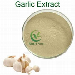 Quality Garlic Extract 1% 2% 3% Allicin