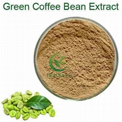 Hot sales green coffee bean extract powder 50 % chlorogenic acid
