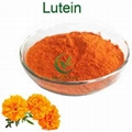Factory Supply Marigold Extract Lutein
