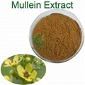FDA high quality mullein leaf extract