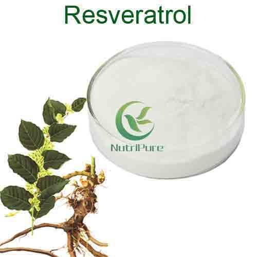 high quality Polygonum cuspidatum root extract resveratrol bulk powder 1