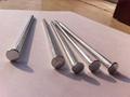 Polished Common Iron Nail 3