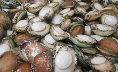Frozen Seafood Frozen Abalone for Sale