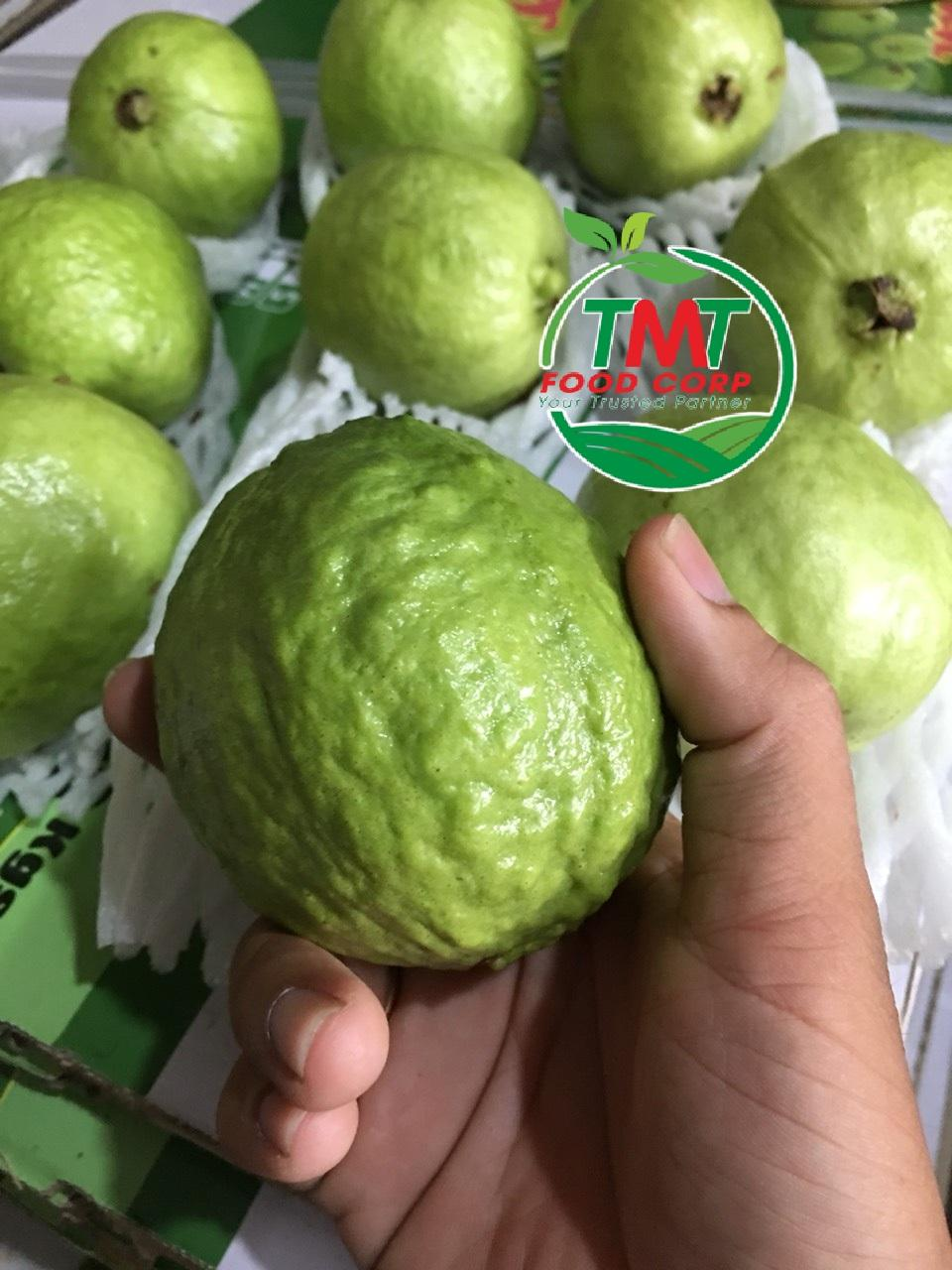 FRESH GUAVA HIGH QUALITY FROM VIETNAM 1