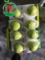 FRESH GUAVA HIGH QUALITY FROM VIETNAM 5