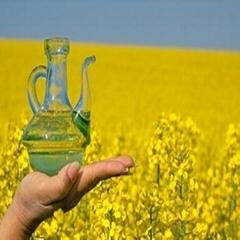 Sunflower Oil Available