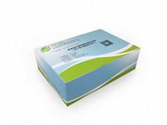 阪崎肠杆菌核酸检测试剂盒恒温荧光法
