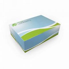 通用型RNA專用檢測試劑盒凍干型恆溫熒光法