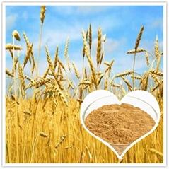 小麦低聚肽