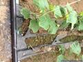 黃瓜蔬菜大棚用內鑲式滴灌管 5