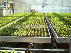 Stationary Metal Greenhouse Benches for Commercial Nursery