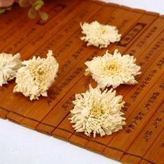 High Grade White Chrysanthemum