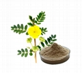 Chinese factory supply 100% Natural gmp
